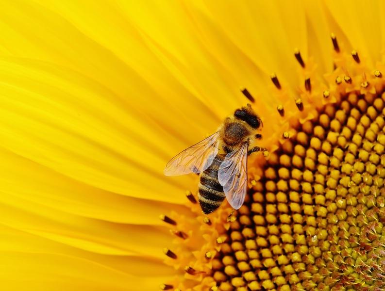healthy organic bee hive