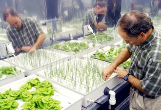 hydroponic produce