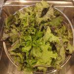 rinsing kale leaves