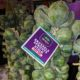 raw brussels sprouts at farmers market
