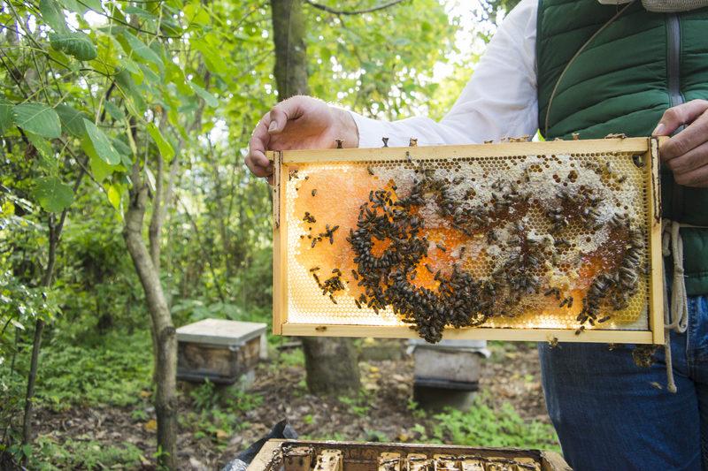 organic beehive