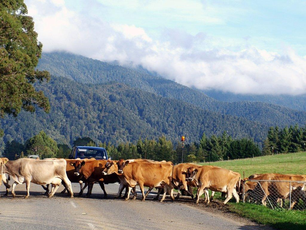 Cow Happy Lines: One Measure of Herd Health