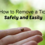 remove a tick safely