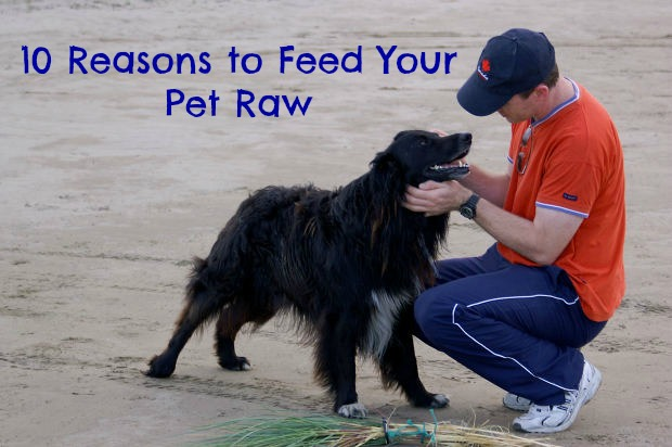 Top 10 Reasons Raw Pet Food is Healthiest for Your Dog or Cat