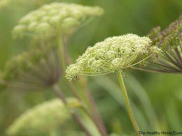 Natural Birth Control Using Herbs