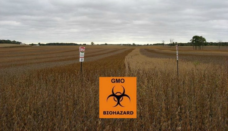 gmo soybeans biohazard crop_mini