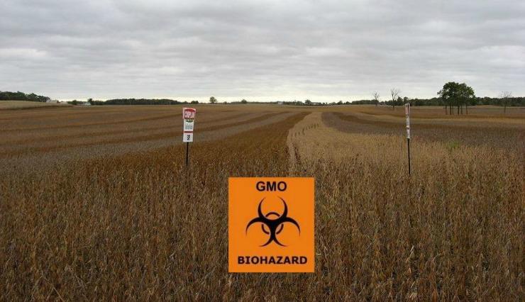 gmo soybeans biohazard crop_mini