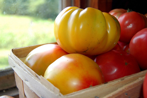 heirloom vs hybrid tomatoes