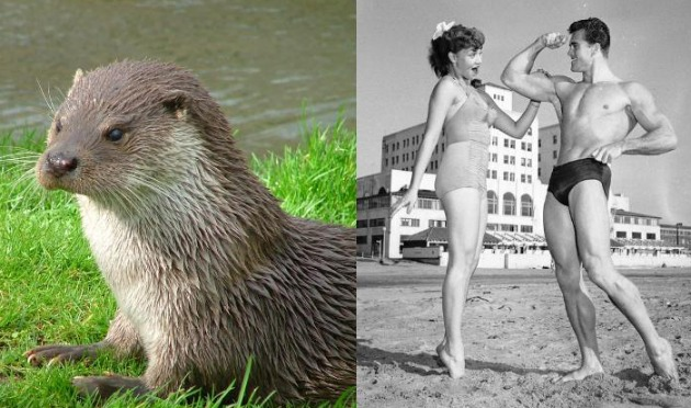otter and bodybuilders