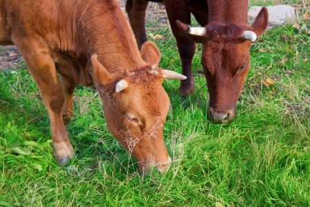 milk matters in human history