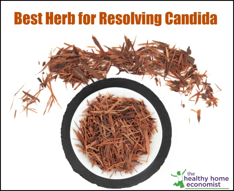 cut pau d'arco herb in a dish for resolving candida