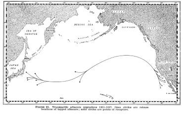 albacore tuna migration
