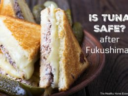 Is Tuna Safe to Eat Post Fukushima?