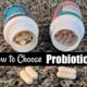 best probiotic brands