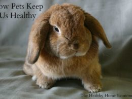 Pet Ownership: Simple Step to Strong Immunity