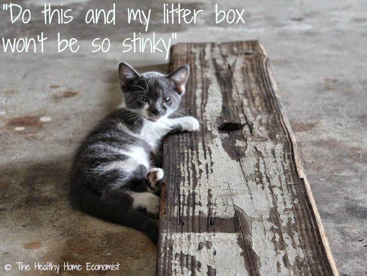 fast fix for a stinky cat litter box