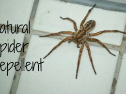Natural Spider Repellent (guaranteed to work)