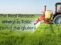The Real Reason Wheat is Toxic (it's not the gluten)