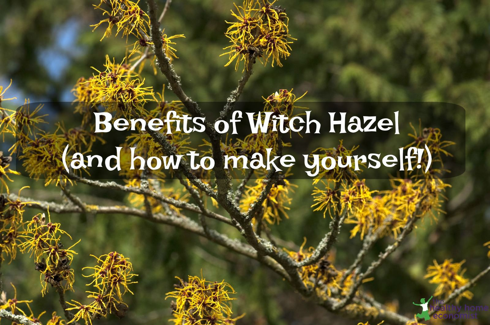 12 Practical Benefits of Witch Hazel Extract (+ recipe to make it yourself)