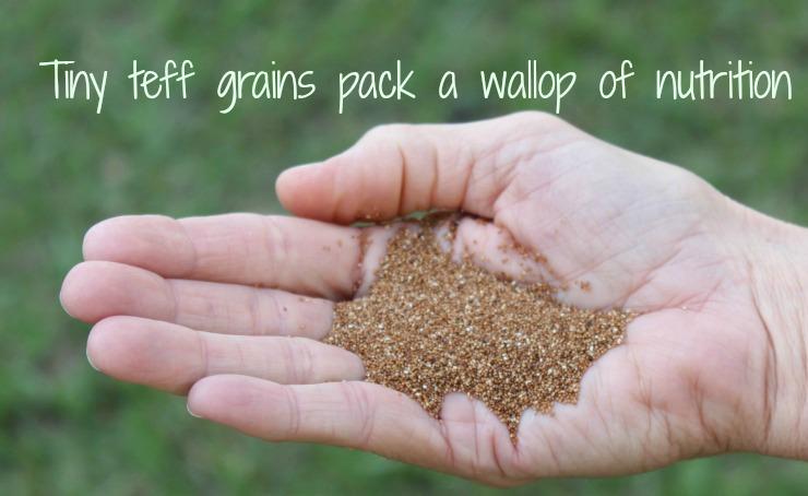 Teff - Nutritious Gluten Free Grain You