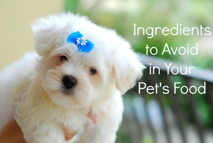 worst pet food ingredients