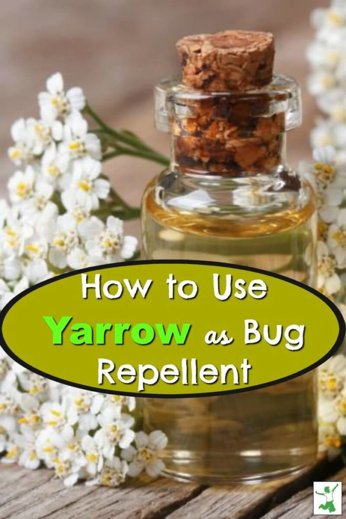 yarrow bug repellent