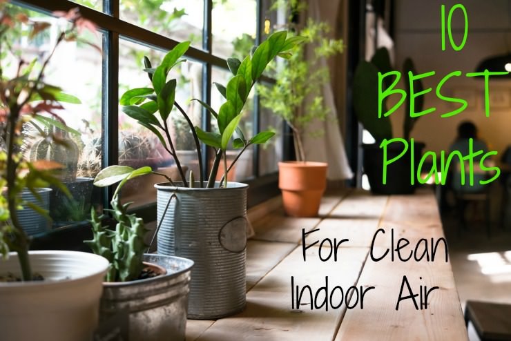 Top 10 House Plants for Clean Indoor Air