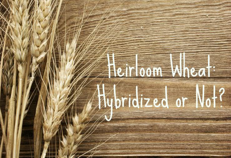 heirloom wheat