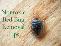 Getting Rid of Bed Bugs Naturally and Effectively