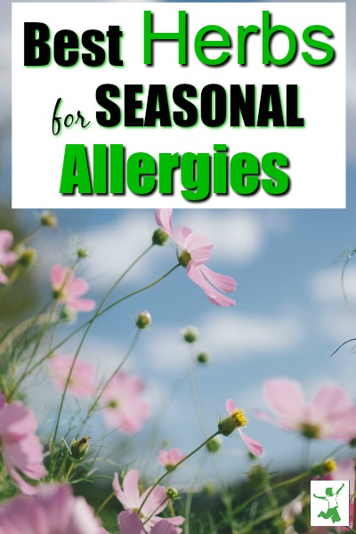seasonal allergy herbs