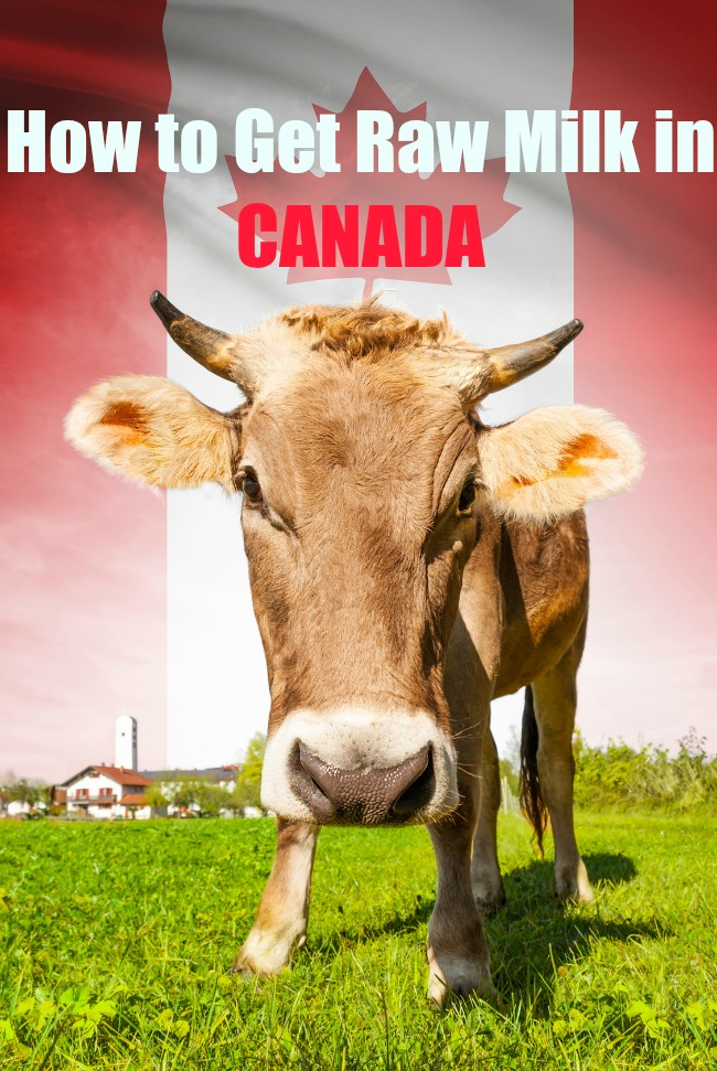 raw milk in Canada