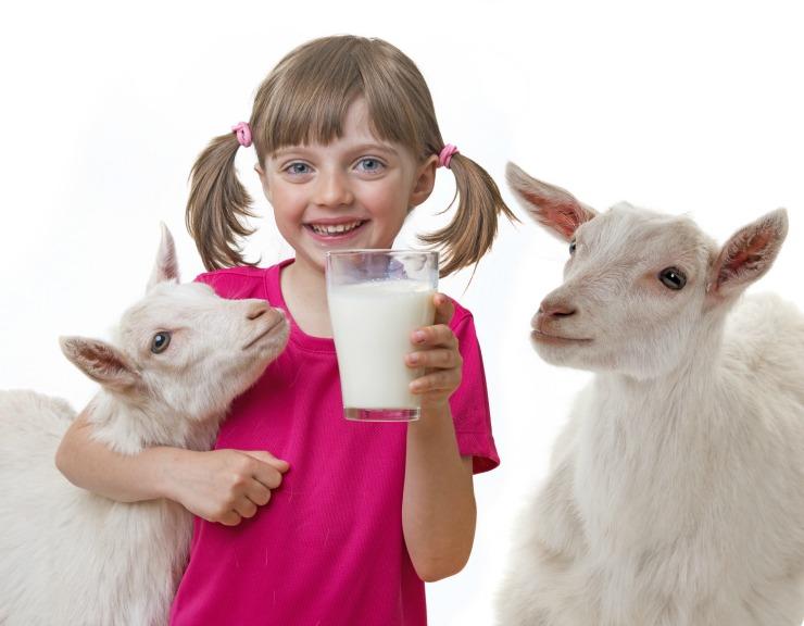 little girl drinking raw goat milk