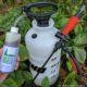 bottle of neem with pump sprayer