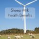 sheep milk benefits