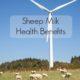 sheep milk benefits