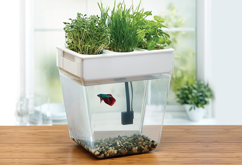 aquaponic water garden
