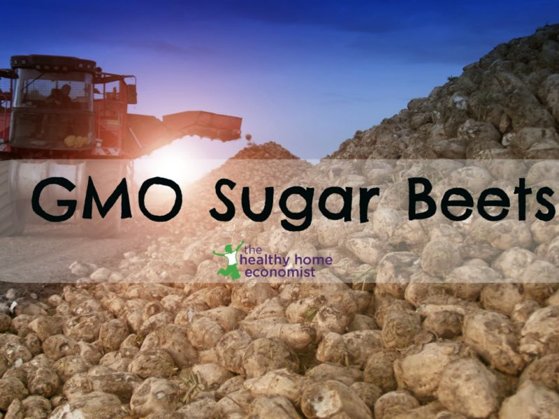 harvesting of gmo sugar beets