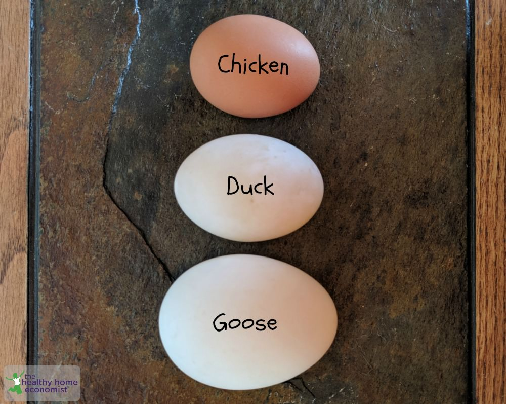 All About Goose Eggs and Why to Try Them!