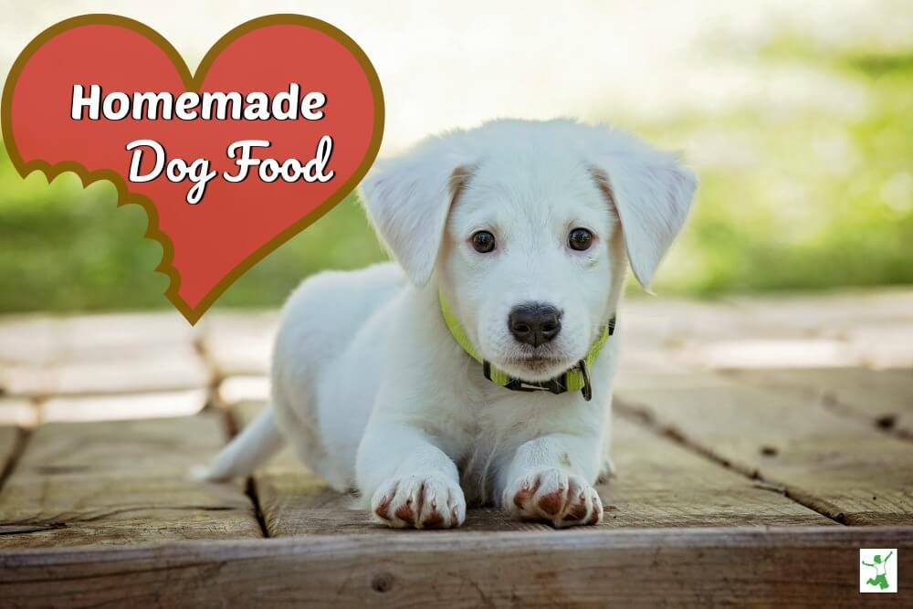 Homemade Dog Food (healthy, budget-friendly)