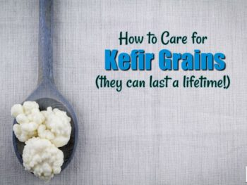 caring for kefir grains