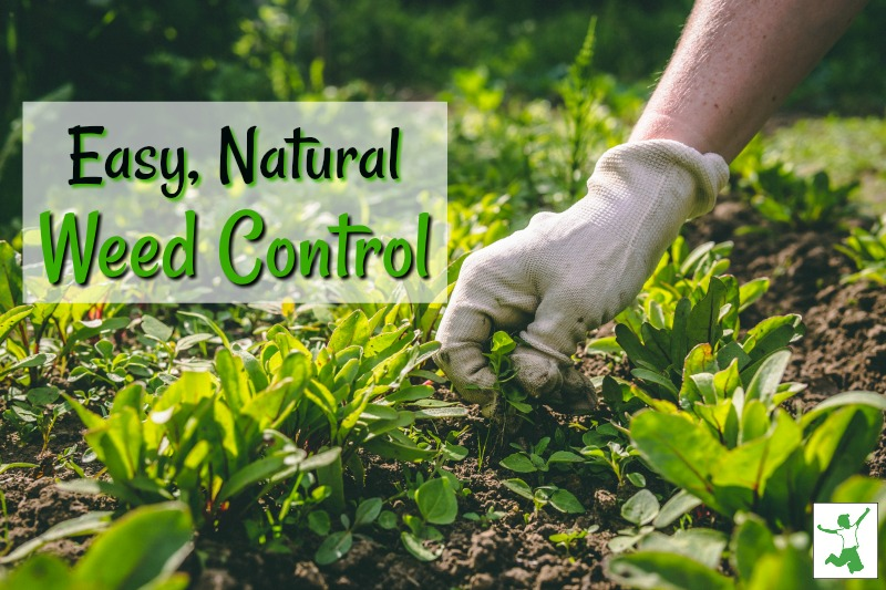 natural home weed control