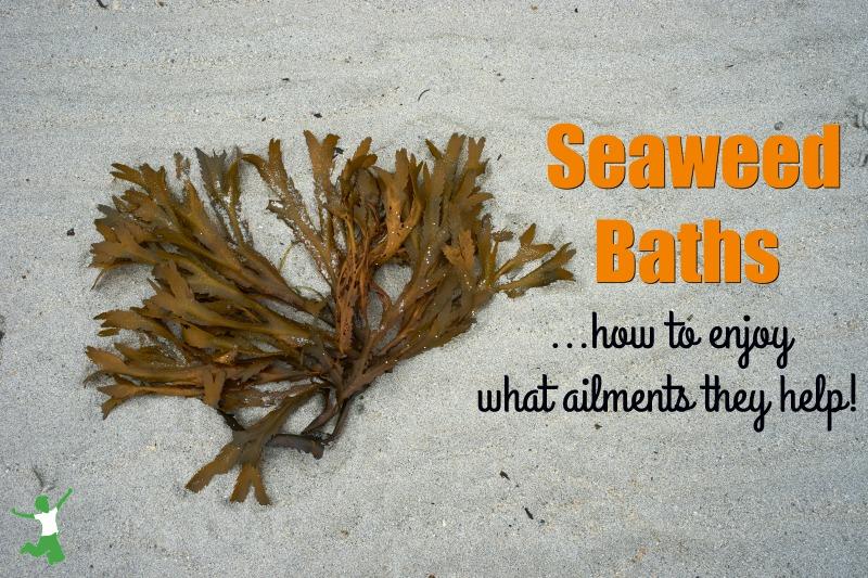 brown seaweed on a beach sand