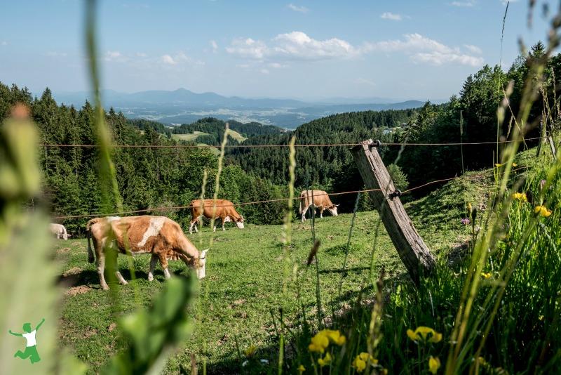 Genes de resistência antimicrobiana no leite cru? 24