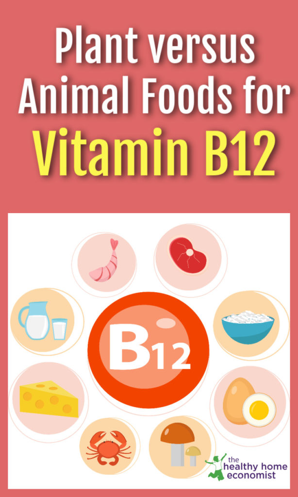 different B12 food sources on a white background